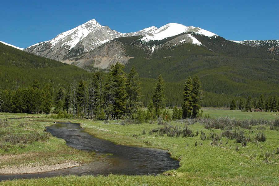 Trail Ridge Road Three Rocky Mountain National Park Elk